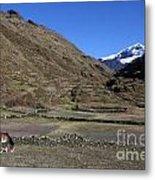 Horse Grazing In The Cordillera Apolobamba Foothills Metal Print