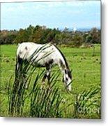 Horse Grazing In Field Metal Print