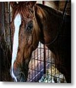 Horse In A Box Stall - Horse Stable Metal Print