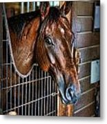 Horse In A Box Stall II - Horse Stable Metal Print by Lee Dos Santos