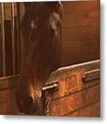 Horse In A Stable Metal Print