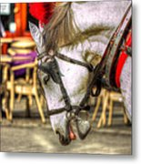 Horse In Cracow Metal Print
