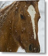 Horse In Snow   #4651 Metal Print