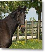 Horse In Spring Metal Print