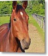 Horse In Stable Metal Print
