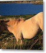 Horse In Wildflower Landscape Metal Print