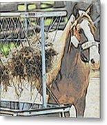 Horse N Hay Metal Print