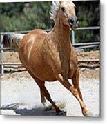 Horse On The Run Metal Print