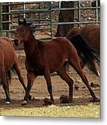 Horse Play Painting  Metal Print