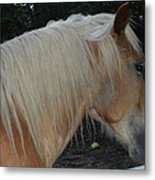 Horse Profile Metal Print by Cim Paddock