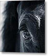 Horse Reflection Metal Print