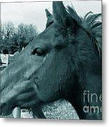 Horse Sense Metal Print by Steven Milner