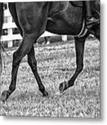 Horse Stepping Metal Print