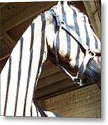 Horse Stripes Metal Print