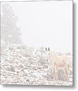 Horse With Winter Season Snow And Fog Metal Print