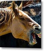 Horse Yawn Metal Print