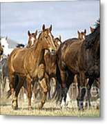 Horses-animals-2 Metal Print