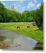 Horses At Home On The Range Metal Print