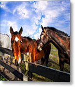 Horses At The Fence Metal Print