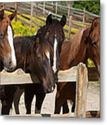 Horses Behind A Fence Metal Print