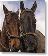 Horses  Belonging To Chagras Ecuador Metal Print