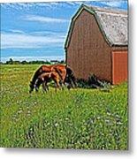 Horses By A Barn Along Confederation Trail-pei Metal Print