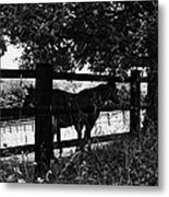 Horses By The Fence Metal Print