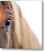 Horses Eye Metal Print