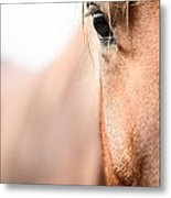 Horses Eye No. 2 Metal Print