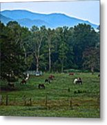 Horses Graze At Dawn Metal Print