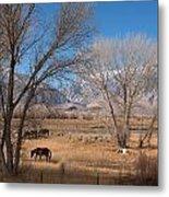 Horses Graze Beside The Owens River Near Bishop Metal Print
