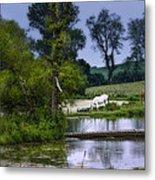 Horses Grazing At Water's Edge Metal Print