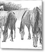 Horses Grazing Pencil Portrait Metal Print