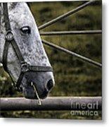 Horse's Head Metal Print