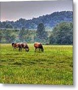 Horses In A Field 2 Metal Print