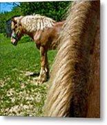 Horses In Meadow Metal Print