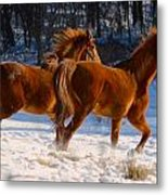 Horses In Motion Metal Print