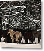 Horses In Snow Metal Print by Tanya Jacobson-Smith