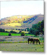 Horses In The English Countryside Metal Print