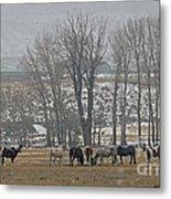 Horses In The Snow   #7940 Metal Print