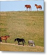 Horses Of Hayward Metal Print