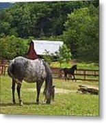Horses On A Farm Metal Print