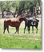 Horses Out Wickenburg Way Metal Print