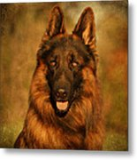 Hoss - German Shepherd Dog Metal Print