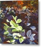 Hostas In The Forest Metal Print