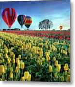 Hot Air Balloons Over Tulip Field Metal Print