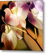 Hot Orchid Nights Metal Print