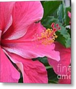 Hot Pink Hibiscus 2 Metal Print