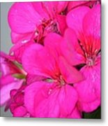 Hot Pink In February Metal Print