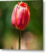 Hot Pink Tulip Metal Print